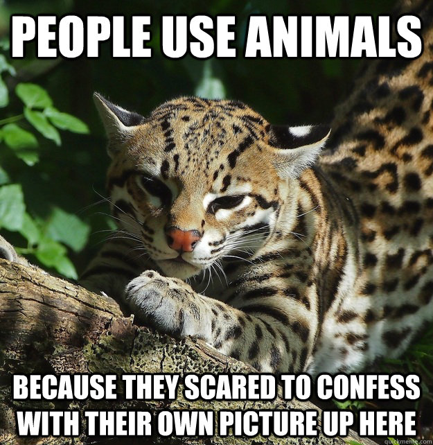 people use animals because they scared to confess with their own picture up here