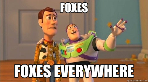 Foxes Foxes everywhere