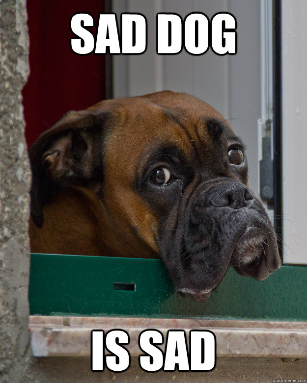 sad dog is sad