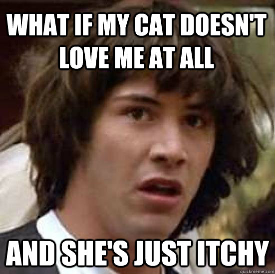 what if my cat doesn't love me at all and she's just itchy - what if my cat doesn't love me at all and she's just itchy  conspiracy keanu