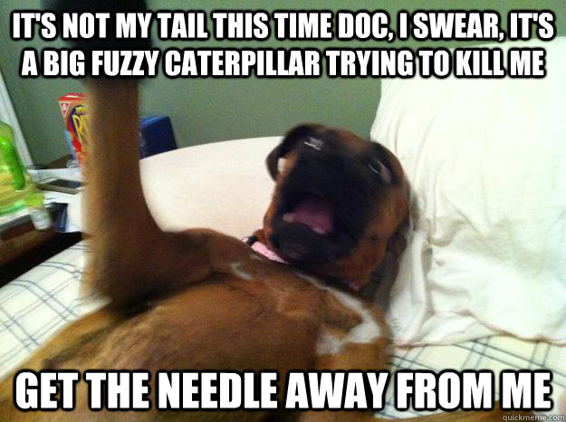 it's not my tail this time doc, i swear, it's a big fuzzy caterpillar trying to kill me get the needle away from me