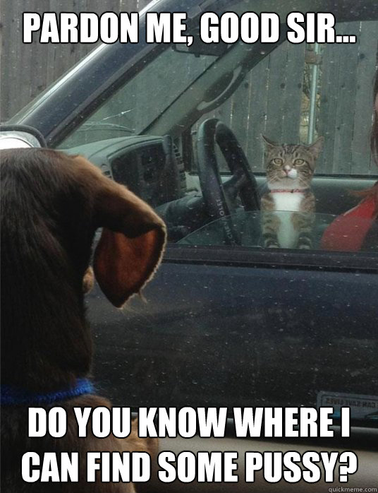 PARDON ME, GOOD SIR... Do you know where I can find some pussy? - PARDON ME, GOOD SIR... Do you know where I can find some pussy?  Cat needs directions