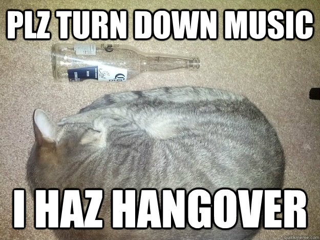 Plz turn down music I haz hangover - Plz turn down music I haz hangover  hangover kitty