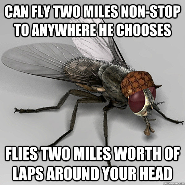 can fly two miles non-stop to anywhere he chooses flies two miles worth of laps around your head