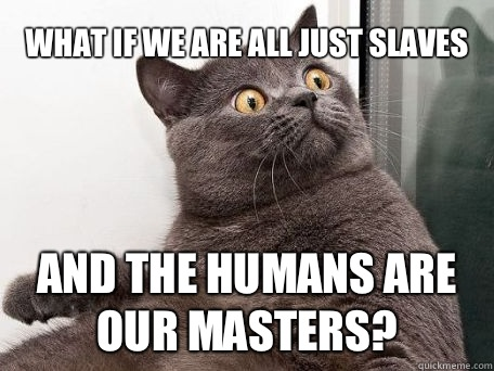 What if we are all just slaves And the humans are our masters?  conspiracy cat