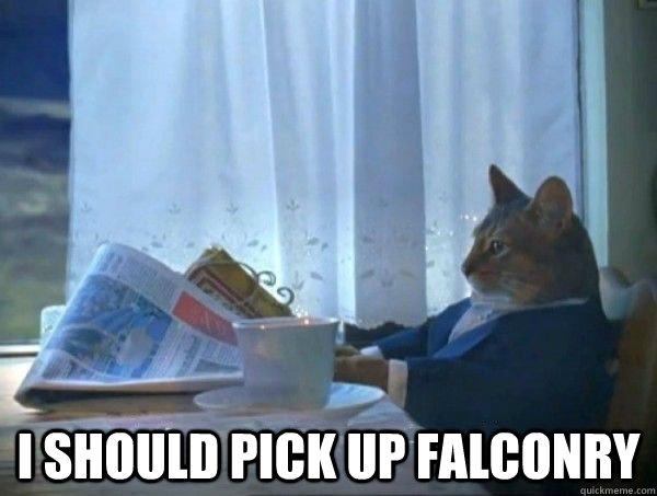 I should pick up falconry -  I should pick up falconry  morning realization newspaper cat meme