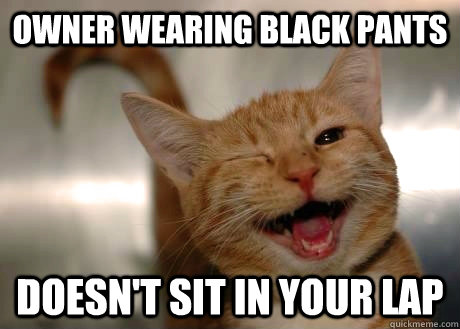 owner Wearing black pants doesn't sit in your lap