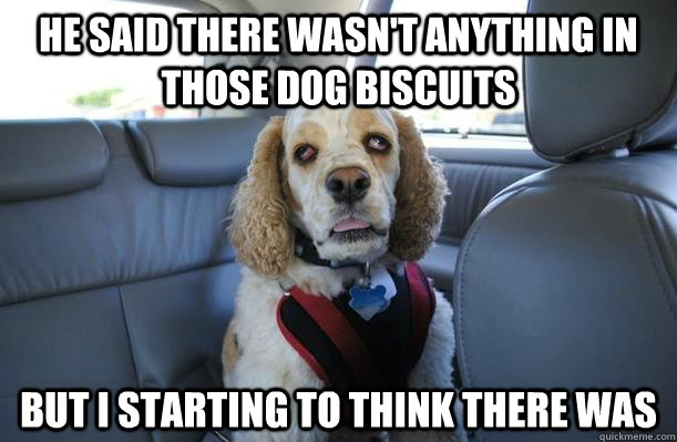 He said there wasn't anything in those dog biscuits  But I starting to think there was  10 Dog