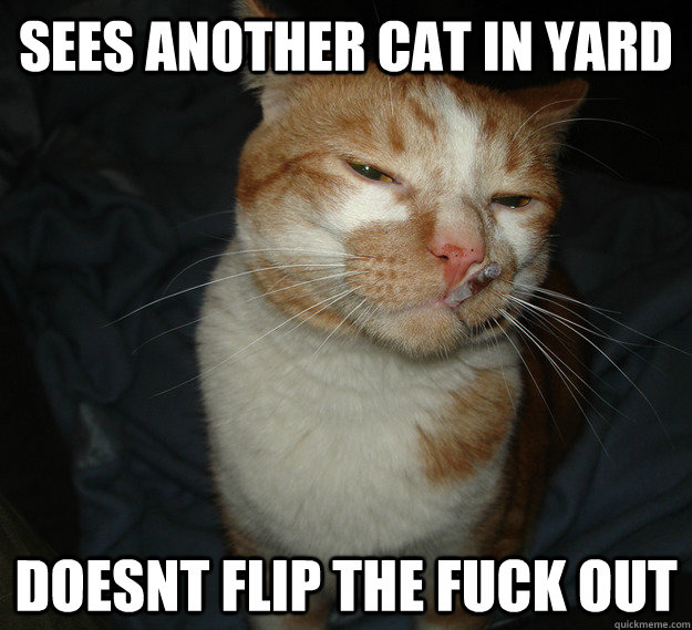 sees another cat in yard doesnt flip the fuck out