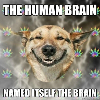 the human brain named itself the brain  Stoner Dog