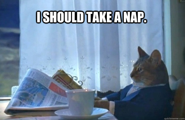 I should take a nap. - I should take a nap.  Sophisticated Cat