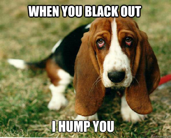 When you black out I hump you  Basset Hound of guilt
