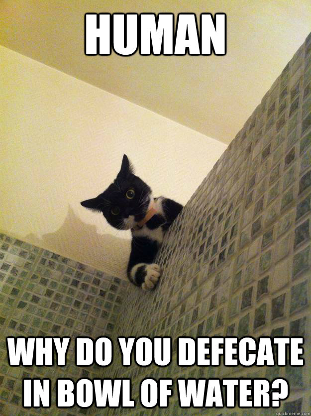 human Why do you defecate in bowl of water? - human Why do you defecate in bowl of water?  Incredulous Cat