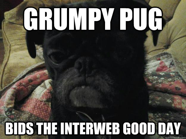 Grumpy pug bids the interweb good day - Grumpy pug bids the interweb good day  Original Grumpy Pug