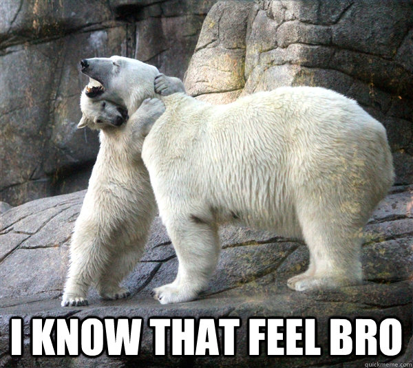 Hugging Polar Bears Memes Quickmeme
