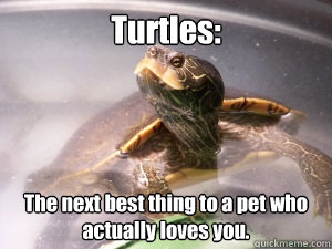 f34305ec460633d7a5e302b2989e1ca34053903169c46b6d4f7efd3c7f61547e turtles the next best thing to a pet who actually loves you