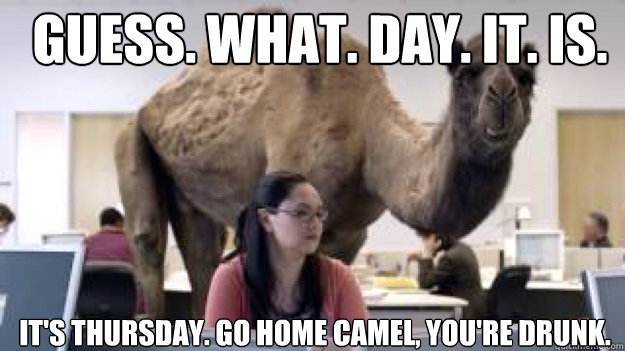 GUESS. WHAT. DAY. IT. IS. It's Thursday. Go home camel, you're drunk.  Caption 3 goes here