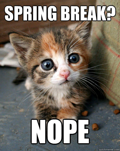 Spring break? Nope  Thesis Kitten