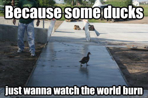 Because some ducks just wanna watch the world burn
