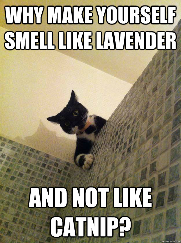 Why make yourself smell like lavender and not like catnip? - Why make yourself smell like lavender and not like catnip?  Incredulous Cat