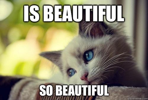 Is beautiful  So beautiful - Is beautiful  So beautiful  First World Cat Problems