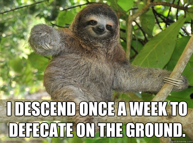 I descend once a week to defecate on the ground. -  I descend once a week to defecate on the ground.  Sloth menthols