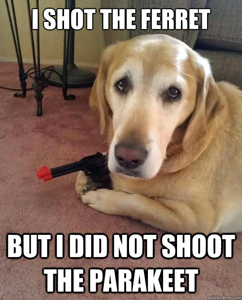 I shot the ferret But I did not shoot the parakeet