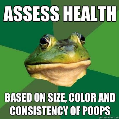 assess health based on size, color and consistency of poops - assess health based on size, color and consistency of poops  Foul Bachelor Frog