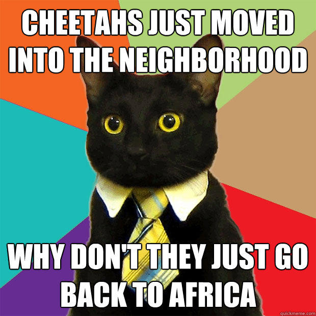 Cheetahs just moved into the neighborhood why don't they just go back to africa - Cheetahs just moved into the neighborhood why don't they just go back to africa  Business Cat