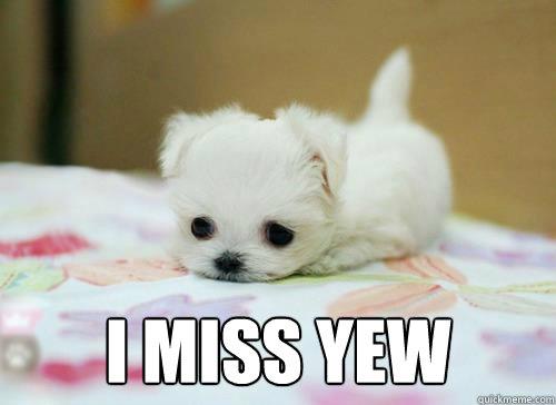 f570799290792a0236798707301d59bfdc7155d61e1af3d09ba620e92162e3b3 i miss you come back please i miss you quickmeme