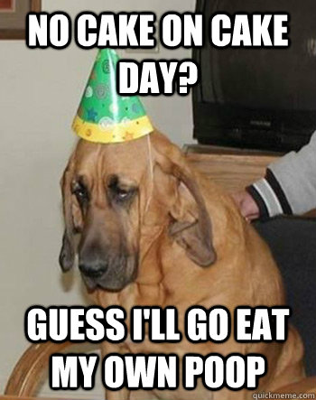 no cake on cake day? guess i'll go eat my own poop - no cake on cake day? guess i'll go eat my own poop  Sad Birthday Dog