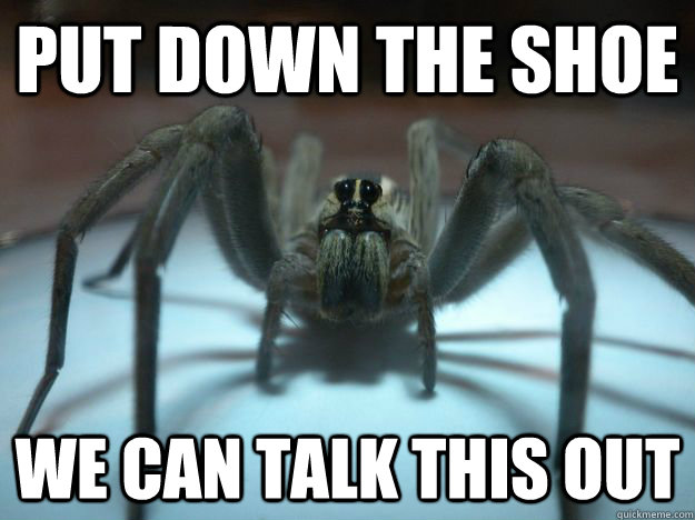 PUT DOWN THE SHOE WE CAN TALK THIS OUT  Sad Wolf Spider