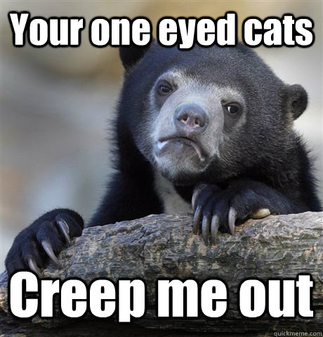 Your one eyed cats Creep me out - Your one eyed cats Creep me out  Confession Bear