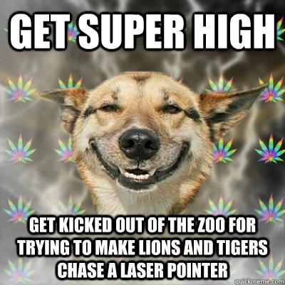 get super high get kicked out of the zoo for trying to make lions and tigers chase a laser pointer  Stoner Dog