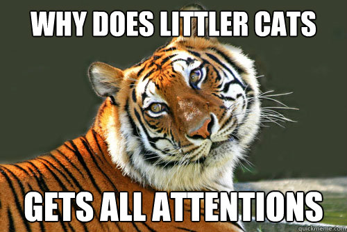 Why does littler cats gets all attentions - Why does littler cats gets all attentions  Stoopid Tiger