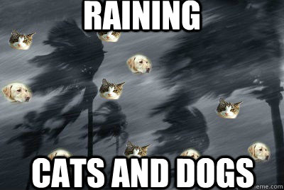 raining  cats and dogs  - raining  cats and dogs   Misc