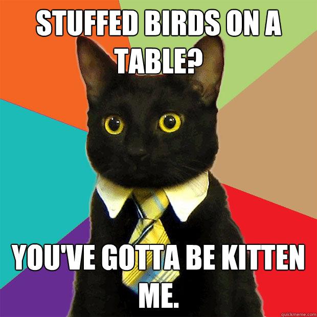 stuffed birds on a table? you've gotta be kitten me.  Business Cat