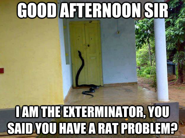 Good afternoon sir I am the exterminator, you said you have a rat problem?