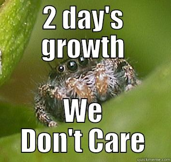 2 DAY'S GROWTH WE DON'T CARE Misunderstood Spider