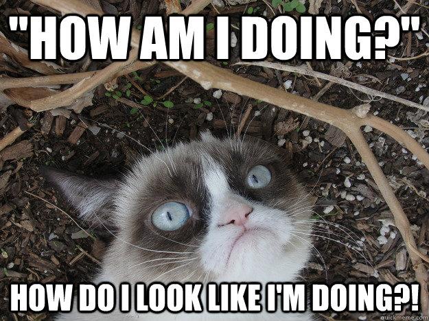 Funny Meme About Work Stress : Stressed grumpy cat memes quickmeme