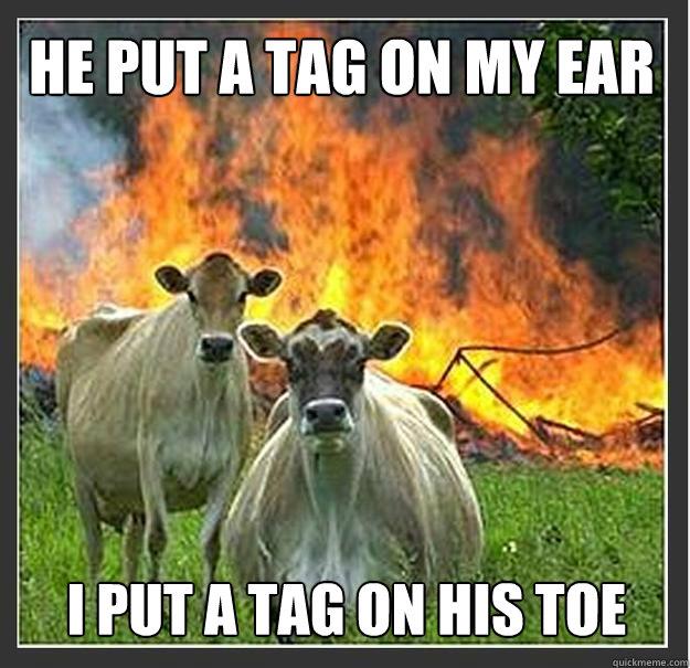 He put a tag on my ear I put a tag on his toe - He put a tag on my ear I put a tag on his toe  Evil cows