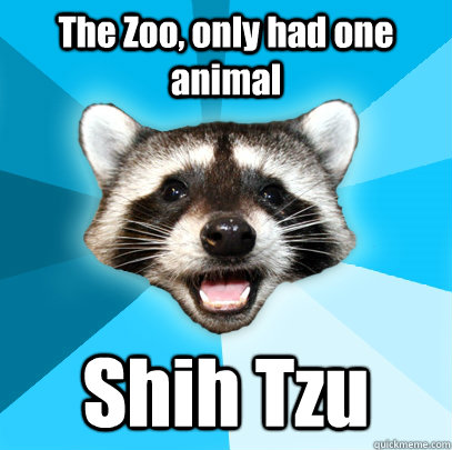 The Zoo, only had one animal Shih Tzu - The Zoo, only had one animal Shih Tzu  Lame Pun Coon