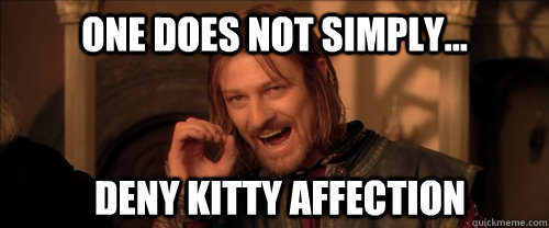 One does not simply... deny kitty affection