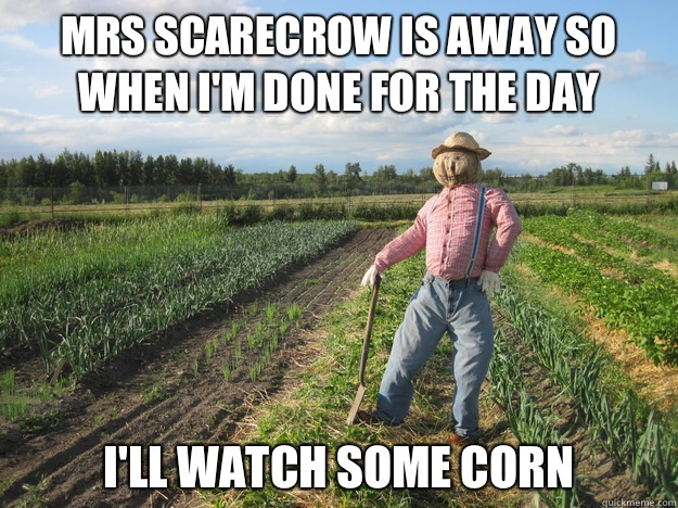 Mrs scarecrow is away so when I'm done for the day I'll Watch some corn  Scarecrow