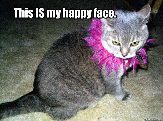happy cat memes - photo #18