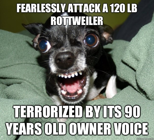 Fearlessly attack a 120 lb Rottweiler Terrorized by its 90 years old owner voice