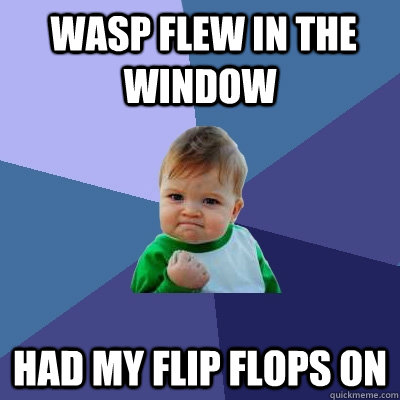 wasp flew in the window had my flip flops on -  wasp flew in the window had my flip flops on  Success Kid