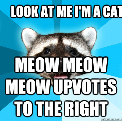 LOOK AT ME I'M A CAT MEOW MEOW MEOW UPVOTES TO THE RIGHT - LOOK AT ME I'M A CAT MEOW MEOW MEOW UPVOTES TO THE RIGHT  Lame Pun Coon