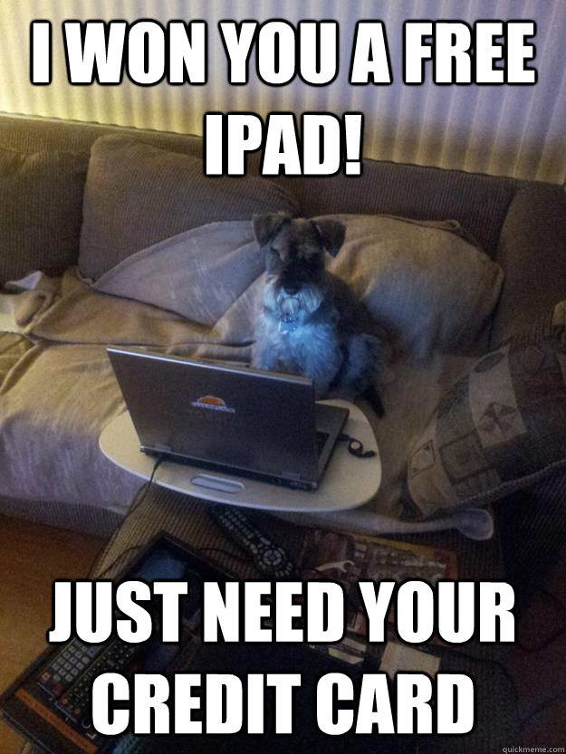 I won you a free ipad! Just need your Credit Card - I won you a free ipad! Just need your Credit Card  Surfing Schnauzer