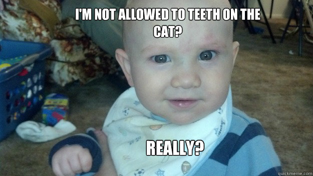 I'm not allowed to Teeth on the cat? Really?
